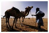 Mauritanie - Puiser la vie 23