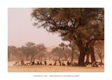 Wonderful Mali 79