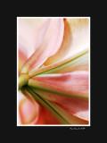 Stem and petals