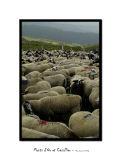 Herd 1