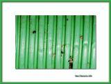 Green plastic tube with dirt, Salir do Porto