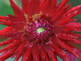 Big Red Flower 19926