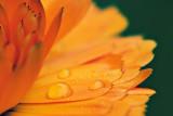 Floral Droplets 21225