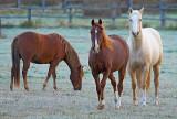 Curious Horses 21856
