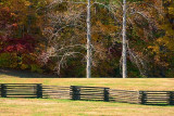 Split Rail Fence & Two Trees 24697