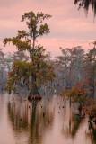 Lake Martin At Sunrise 25369