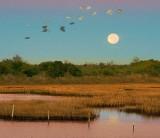 Marsh Moonset 30656