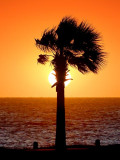 A Palm In The Sun 20090113