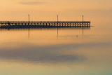 Goose Island Pier 39145