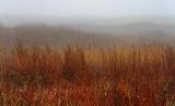 Mustang Island In Fog 42402