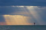 Gulf Sunrays 43108