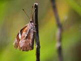 Butterfly On A Stalk 45034
