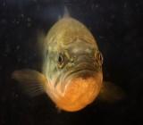 Fish Face 20090402