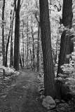 Morris Island Trail 62251 (faux IR)