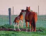 Frisky Foal 20090608