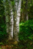 Four Birches 49550 Art