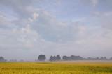 Field & Trees 03808