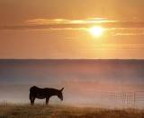 Donkey In Sunrise Mist 03927