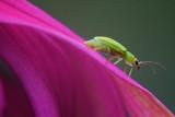 Bug On A Coneflower 20090923