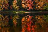 Autumn Trees Reflection 20091005