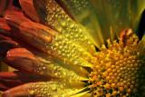 Dewy Flower 51631-3