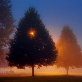 Trees In Fog 19026