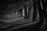 Tree Shadows 20762-4 B&W