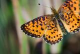 Butterfly In Flight 54383