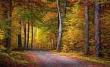 Autumn Backroad 20100924