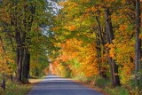 Autumn Road 20101001