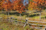 Autumn Split-rails 23460