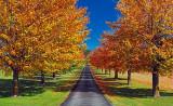Autumn Farm Lane 20101007