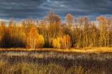 Autumn Landscape 00480