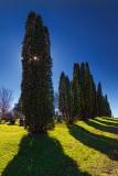 Tree Shadows 01357