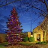 Municipal Christmas Tree 20101121