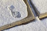 First Snow 02223