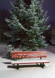 Snowy Bench 03480-2