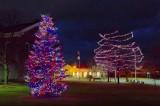 Holiday Lights 04393-7