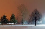Snowfall In The Park 20110104