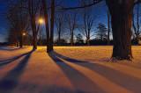 Tree Shadows At Dawn 20110117
