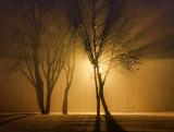 Fog Light 20110128