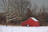 Little Red Shed 05345