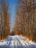 Snowy Backroad 05402