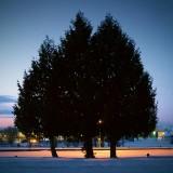 Three Pines 20110213