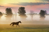 Horse At Sunrise 28055
