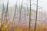 Dead Trees In Autumn Fog 28505