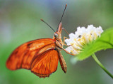 Orange Butterfly 28220