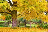 Autumn Colors 20121006
