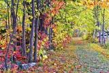 Autumn Trail 28867