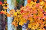 Autumn Leaves 20121013